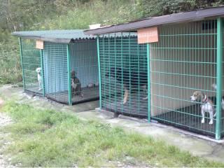 hotel dla zwierząt Wałbrzych-1