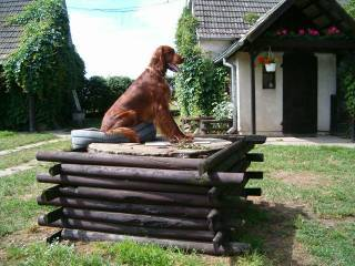 Hotel dla psów - Nekla-1