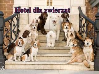 Hotel dla psów Olsztyn-1