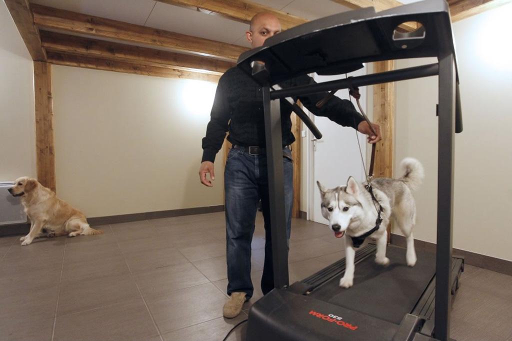 Pies na taśmie do biegania w hotelu dla psów